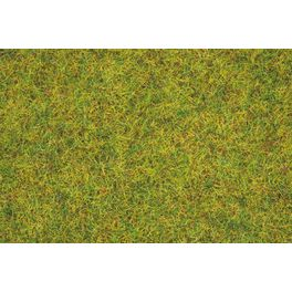 Sommerwiesen-Gras
