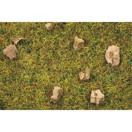 Steinige Bergwiesen-Gras